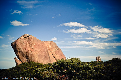 "A ""Dog"" rock at Thistle Cove, Cape Le Grand"