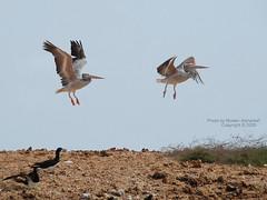 Takeoff (CLICK GROUP   Moeen) Tags: nikon saudiarabia  jazan gizan      d40x