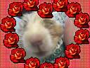 Cutie and Hammy. 2009. 008 (I love Hammy) Tags: hamsters