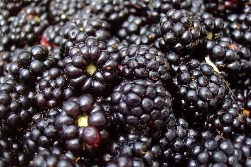 mmm, blackberries