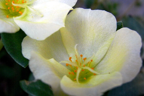 Flower-029