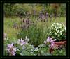 I love my garden....... (karin_b1966) Tags: plant flower nature garden ilovenature blossom oneofakind natur pflanze blume blüte garten naturephotography flowergarden flowercloseups foreveryone flowerphotography flowerlovers beautyofnature flickrflowrpowr thebeautyinlife flickrnature beautyofthenatureworld anythingdigital