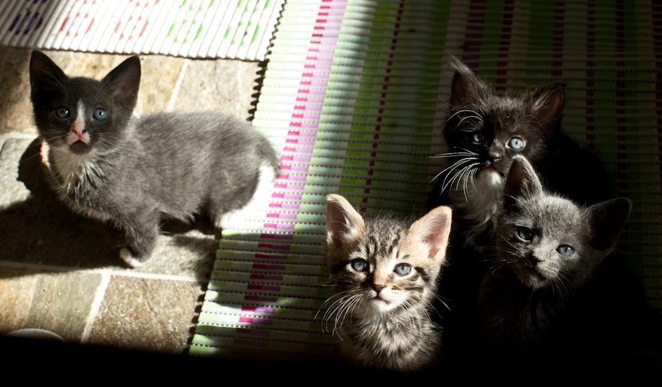 Sun Babies