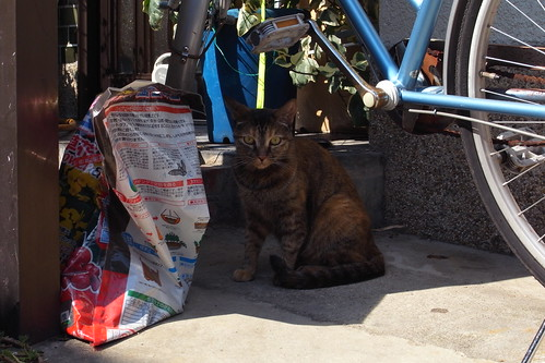 Today's Cat@20090906