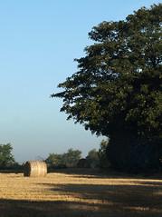 Summers end (Mr Grimesdale) Tags: landscape harvest olympus hay ormskirk e510 mrgrimsdale stevewallace aughton westlancashire mrgrimesdale