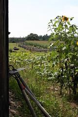 farm (flutterbycharlie) Tags: ontario canada saultstemarie