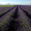 Valesol lavender fields (rinogas) Tags: france nikon lavender francia provenza lavanda abigfave valensol rinogas