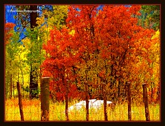 Colorado Countryside (mountainbeliever) Tags: autumn trees southwest nature colors rockies landscapes countryside scenery colorado seasons fallcolors fences brush foliage views picnik fourcorners countryliving coloradoscenes colorfulcolorado autumnscenes fallchange southwestcoloradomountains