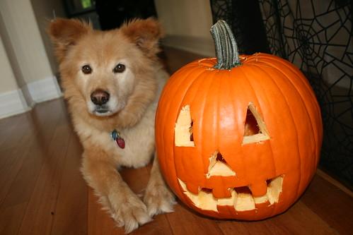 Bear & Pumpkin