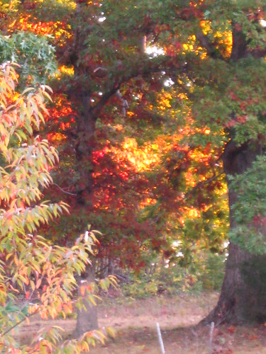 Morning Sun in Autumn Trees