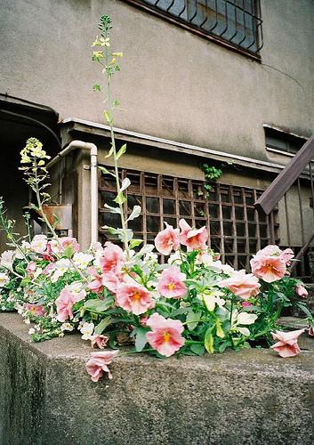 cameragirls-肉鬆-02