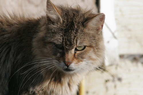 A Handsome Feral Cat