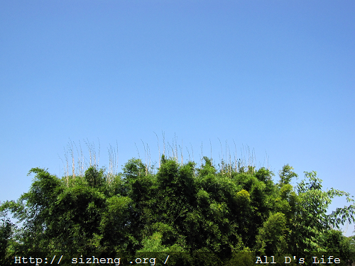 张牙舞爪的竹林