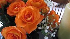 IMG_0556 (TomRjr) Tags: flowers halloween trueblood sx20is