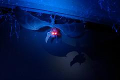 Bat Thing