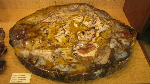 Psychedellic petrified wood