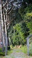 Strada verde (archj86) Tags: road italy rome roma verde green strada italia selva sanpietrini lazio bosco oscura camminata selciato