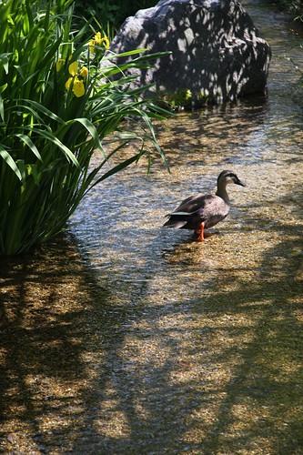 水鳥の楽園