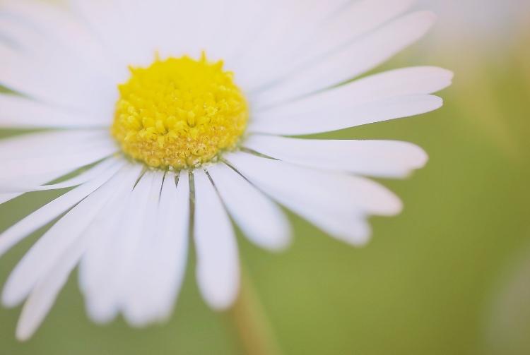 Kópia – kvet(1)