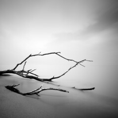 Stranded (Jeff Gaydash) Tags: longexposure trees blackandwhite ontario canada tree beach water square lakeerie seascapes shoreline greatlakes printing pointpelee lakescapes piezography