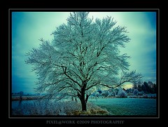 ... my fantasy... (oliver's | photography) Tags: trees winter friends light tree art nature fauna photoshop canon eos amazing flickr raw oliver searchthebest angle image awesome natur  frosty explore fantasy adobe frame dslr 2009 soe lightroom copyrighted blueribbonwinner supershot amazingshot pixelwork totalphoto photographyrocks flickrific mywinners abigfave anawesomeshot flickrdiamond canoneos450d theunforgettablepictures overtheexcellence goldstaraward thebestofday sigma1770mmf2845dchsm rubyphotographer flickrlovers paololivornosfriends doubledragonawards dragondaggerphoto oneofmypics pixelworkphotography flickraward oliverhoell theacademytreealley allphotoscopyrighted