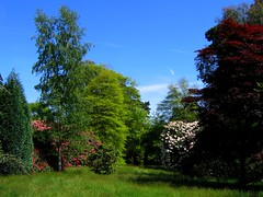 Sheffield Park in Late May (UGArdener) Tags: england english grass haywardsheath unitedkingdom britain may meadow blueskies nationaltrust englishgardens rhododendrons sheffieldpark copperbeeches maymeadow englishtravel