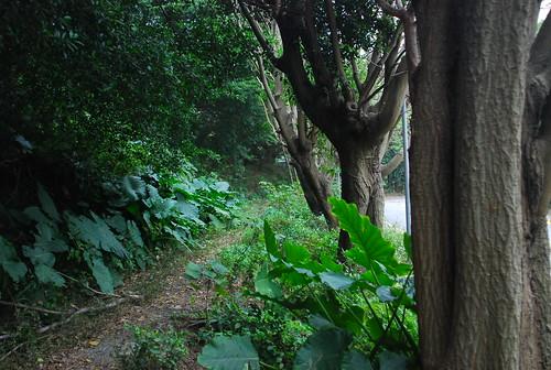 客家文化主題公園擁有公館一帶少見的老樹林