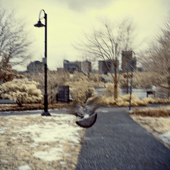 pigeons are too fast for me (cherryvega) Tags: park winter sky snow canada cold bird grass vancouver landscape geotagged ir downtown bc pigeon wildlife flight surreal lamppost squareformat yaletown infrared pigeonchasing geo:lat=49272293 geo:lon=123123288