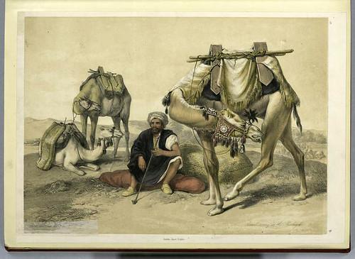 Camellos descansando en el Shekiyeh 1851