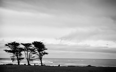 b&w tree - desktop background wallpaper ((matt)) Tags: ocean california ca desktop windows wallpaper sky blackandwhite bw tree water clouds mac waves background widescreen osx free download xp vista hd day52 52365 norcalcoast windows7 photochallengeorg 2009challenge 2560x1600wallpaper 2009challenge52
