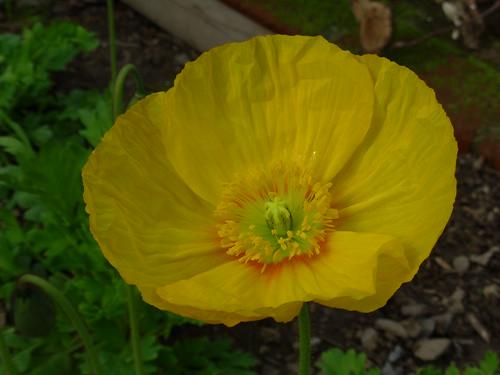 garden 2009 004