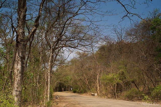 Dry Forest, Sanjay Gandhi National Park