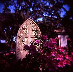 Stone Made Flesh (Comtesse DeSpair) Tags: 120 cemetery georgia mom holga fuji velvia 100 savannah bonaventure 120n