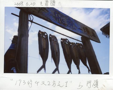 07飛魚.jpg