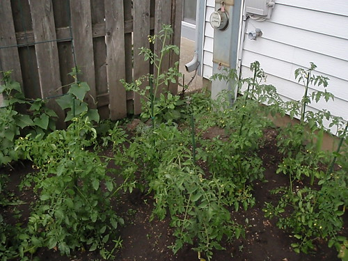 Garden as of July 14