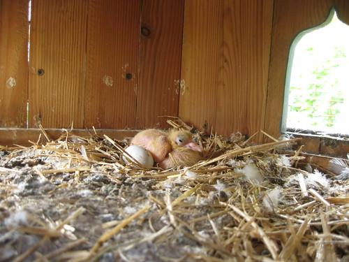 Baby Dove 2