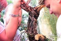 Oficina de Bonsai (Projeto Bonsai) Tags: costa arte oficina bonsai tropical trabalho nordeste cabedelo chcara