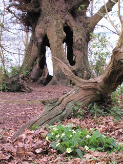 ...and thru the hollow oak to fairyland
