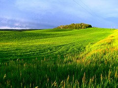 Idaho Green, Seed Potato Fields (moonjazz) Tags: plants green nature field rural potatoes country farming grow seed idaho potato potatoe crops agriculture fertile topshots