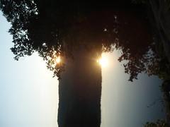 P8010467 (alexyenni) Tags: camping bearmountain july09