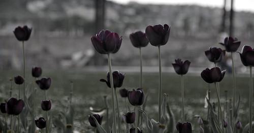 Buda Virágok