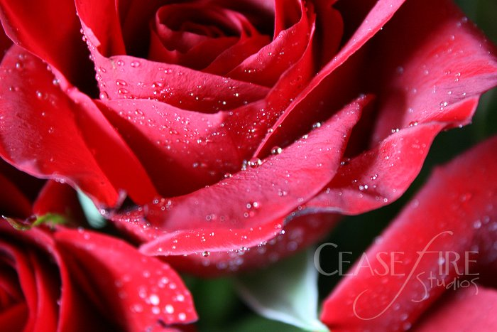 08-21-roses2