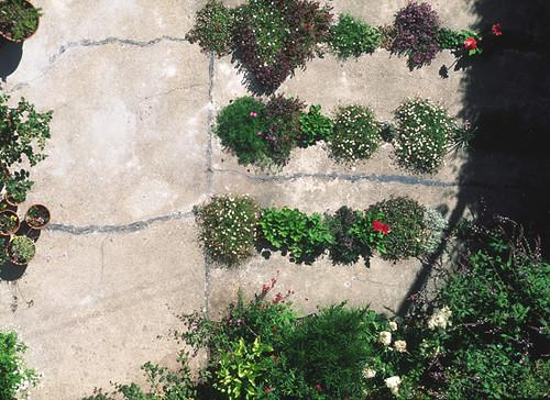 crack garden 1