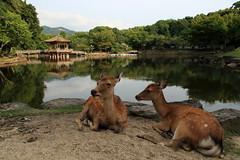 Landscape from Nara (Xelisabetta) Tags: japan canon landscape  nippon nara giappone cervi  eos400d xelisabetta elisabettagonzales