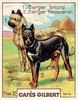 gilbert chiens004