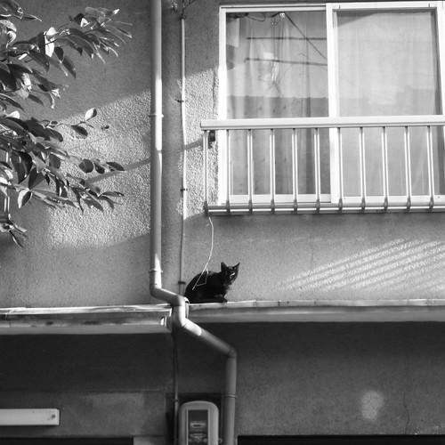 Today's Cat@20090916