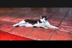Cool Cat (Louie, Lou) Tags: pet animal cat tile fur feline miami lounge kitty monastery tiles rac leaderofthepack spanishmonastery coolcat ninelives dadecounty readyaimclick