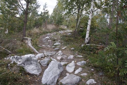 Domsjö natur 032