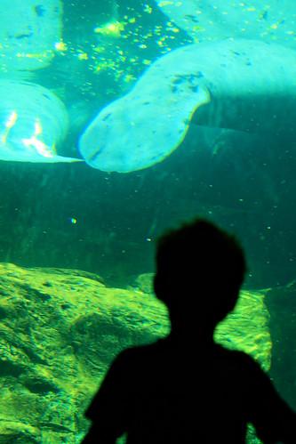 florida seaworld 026