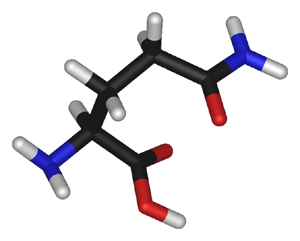 Glutamin - Image wikipedia